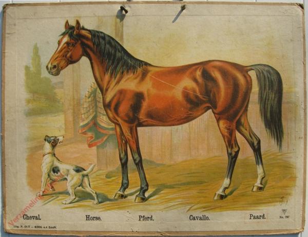 727 - Cheval, Horse, Pferd, Cavallo, Paard